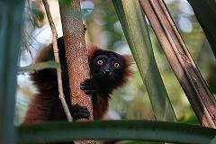 Pourquoi tomber amoureux de Madagascar?