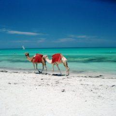 Vacances magiques et orientales: Tunisie
