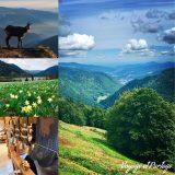 Destination vacances: les Vosges!